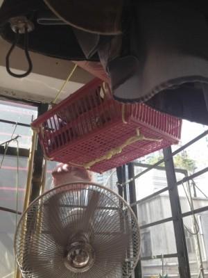陳伯的雪櫃